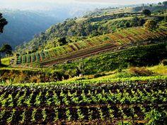 Organic farming @RANGSIT FARM
