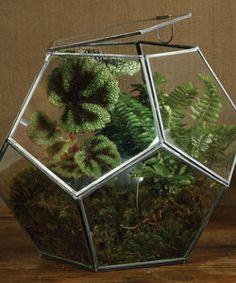 Glass Terrarium - new in home