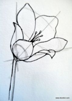 Dion Dior: Tutorial: Drawing Bowl-Shaped Flowers--- I never really thought about doing it this way (shows what I know about drawing, eh?) but this seems reall
