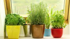Αν δεν έχετε κήπο μπορείτε να βρείτε χώρο στην κουζίνα σας ή κάπου αλλού μέσα στο σπίτι ώστε να έχετε ...