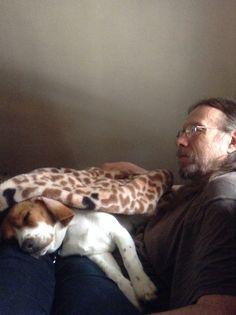 Sleepy pistol beagle