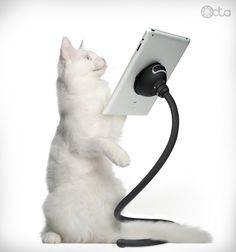 Cat with an iPad and a TabletTail: Monkey Kit...Zorro needs this for when he plays Nemo!