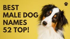 🐶 Best Male Dog Names 39 CUTE 🐾 TOP 🐾 UNIQUE 🐾 Ideas   Names Top Male Dog Names, Unique Female Dog Names, Best Dog Names, Cute Girl Puppy Names, Cute Names, Best Apartment Dogs, Best Dogs For Families, Group Of Dogs, Dog Books