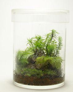 小さなコケの森   道草 苔(こけ)・テラリウム・苔玉の企画販売