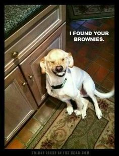 Not even kidding, this happens at my house. If you've ever met my brother you understand why I hide brownies.