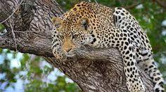 Αποτέλεσμα εικόνας για cheetah