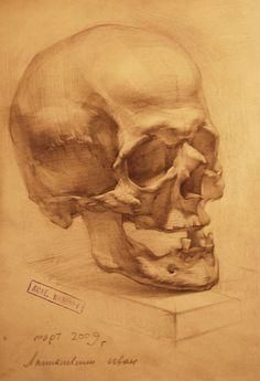 human anatomy 13 by ivany86 on DeviantArt