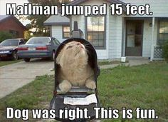 Funny Cat Photos - Have a Laugh Today! These Funny Cat Photos provide that humour break for when you need it most. Let's not take life so seriously - take some time for the silly! Humor Animal, Funny Animal Jokes, Funny Cat Memes, Cute Funny Animals, Animal Memes, Funny Kitties, Silly Cats, Cat Jokes, Pet Memes