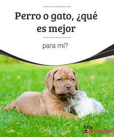 Perro o gato, ¿qué es mejor para mí?   A la hora de escoger una mascota, esta es una pregunta usual entre quienes son amantes del mismo modo de los perros y los gatos, ¿qué debo elegir, perro o gato? Bueno, todo va a depender de tus necesidades y de qué puede aportarte cada uno de los animales. Veamos las diferencias entre ambas razas. #mascotas #diferencias #consejos #elegir