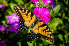 Summer Butterfly by Chad Stewart, via 500px