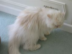 Plantigrade Posture Caused by Potassium Imbalance in Feline Chronic Kidney Disease