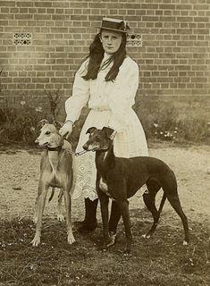 vintage greyhounds pic on ebay