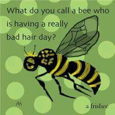 What do you call a bee who is having a really bad hair day? A frisbee.
