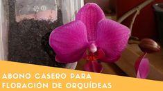 Abono casero para la Floración de Orquídeas alto en potasio || Orquiplanet - YouTube