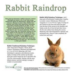 Using essential oils for rabbit health