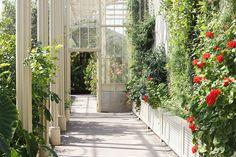 dublin botanic gardens // earworm & plum pudding