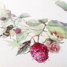 Bee in marionberries.