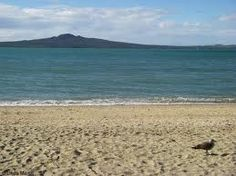 Auckland Beach, NZ New Zealand Beach, New Zealand Landscape, Auckland, Awesome, Water, Places, Outdoor, Google Search, Gripe Water