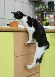 .il y a des chats malins