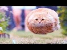 Funny Cat Videos! Funny Animals 2015 - Funny Videos! Funny Cat Fails - Cats Videos - http://positivelifemagazine.com/funny-cat-videos-funny-animals-2015-funny-videos-funny-cat-fails-cats-videos/
