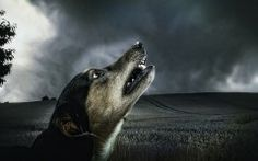 Outstanding photo of Dog Howl in the Dark