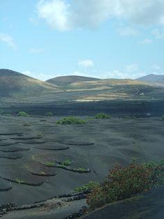 Lanzarote vinyards in volcanic landscape.
