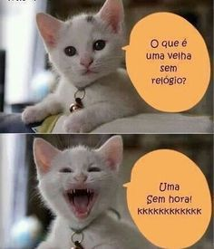 Funny memes animals hilarious faces 57 Ideas for 2019 Crazy Cat Lady, Crazy Cats, Gato Do Face, Funny Animals, Cute Animals, Animal Fun, Funny Cat Faces, Cat Jokes, Cool Pets