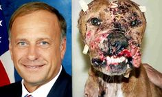 Rep Steve King - (IA, R) - Defends Dog Fighting. King is a longtime advocate for legalizing dogfighting, cockfighting, and other forms of animal torture. Most recently, he fought legislation that would make it illegal to bring a child to an animal fight. He has also set aside his love for states' rights in order to forbid localities from enacting anti-animal torture standards...How about letting him in the ring with them. This is who your vote represents...This is the USA, vote wisely. Video