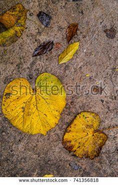 https://www.shutterstock.com/image-photo/leaf-falls-autumn-741356818?src=MDc6WB28dIsUXne3mWdJJA-1-0