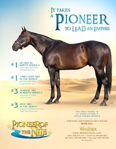 Pioneer of The Nile