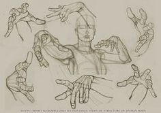 https://www.facebook.com/Stefano-Lanza-Study-of-structure-of-human-body-1479159998770051/ #anatomy #draw #anatomy #drawin #pencil #hands #hand