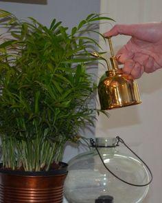 Amazon.com : Haws V200 10 Ounce Plant Mister, Brass : Mister Foggers