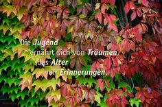 Die Jugend ernährt sich von Träumen, das Alter von Erinnerungen. Jüdisches Sprichwort #sprichwort #Zitate #deutsch Weisheiten & Zitate TÄGLICH NEU auf www.MeinPapasagt.de