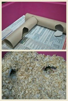 Small Pets DIY... Hamster diy natural habitat tunnels More