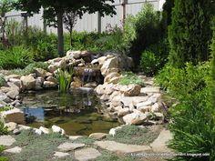 Our backyard pond.