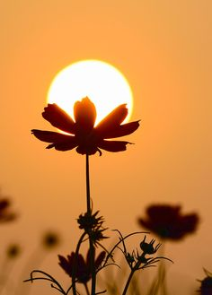 the Gesang flowers and the setting sun Paint Photography, Moon Photography, Artistic Photography, Creative Photography, Flower Phone Wallpaper, Ocean Wallpaper, Sunflower Wallpaper, Beautiful Nature Wallpaper, Diy Canvas Art