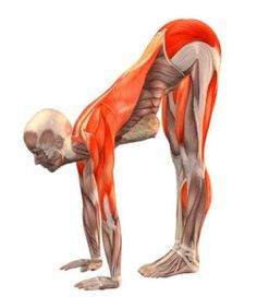 A really great website on stretching. I may be able to finally touch my toes if I follow this program.