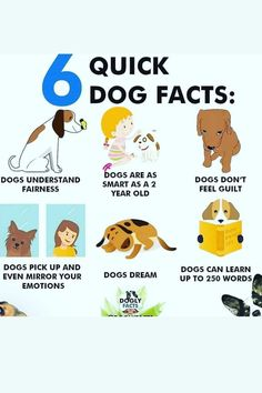 Dog Facts, Old Dogs, Training Your Dog, Feelings, Learning, Words, Studying, Teaching, Horse