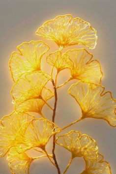 Little Ginkgo studies well.. not yarn  Machine embroidery at it's coolest!