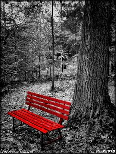 red bench in black and white