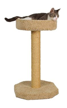 Molly and Friends Bed On Top Of A 27' Sisal Wrapped Scratching Post => You can find more details here : Cat Beds and Furniture