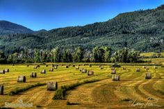 Haying season in the Yampa Valley. Steamboat Springs, Coloardo