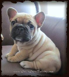 Love a Loyal Bulldog's Mishka