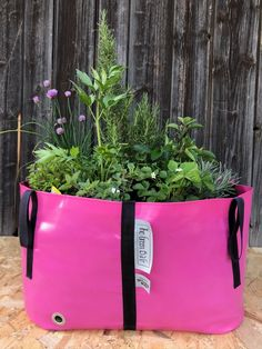 The Big Plant pot for Urban garden needs Big Garden, Herb Garden, Big Plants, Potted Plants, Urban Planters, Green Bag, Flower Beds, North America, Bloom