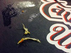 Feathers I found on 2 of the wings in my order, Tavern United Brandon  |  1125 18th Street, Bran