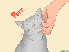3 manières de parler avec votre chat - wikiHow Devon Rex, Natural Ant Repellant, Chat Oriental, First Time Cat Owner, Cat Steps, Son Chat, Pikachu, Animals, Fictional Characters