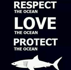 Protect our sharks@terabramyan #sharks