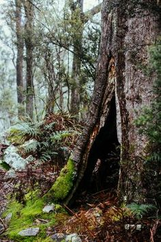 Tasmanian Rainforest II Photographic Print