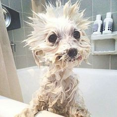 Bath time,  but c'mon?! How can you not come up with something as inspiration? Plus the look on this dog's face is hilarious!