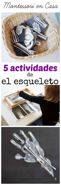 5 divertidas y fáciles actividades preescolares para aprender sobre el esqueleto. Imprimibles gratuitos de un esqueleto. Skeleton theme Montessori activities with lots of   free printables.